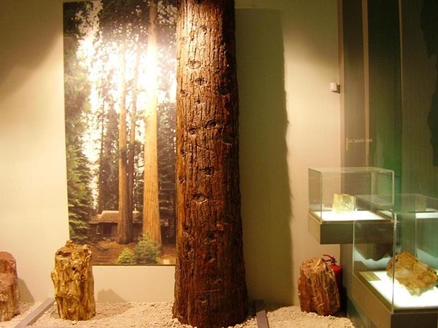 fosillesmis-orman-muzesi-icten-gorunum