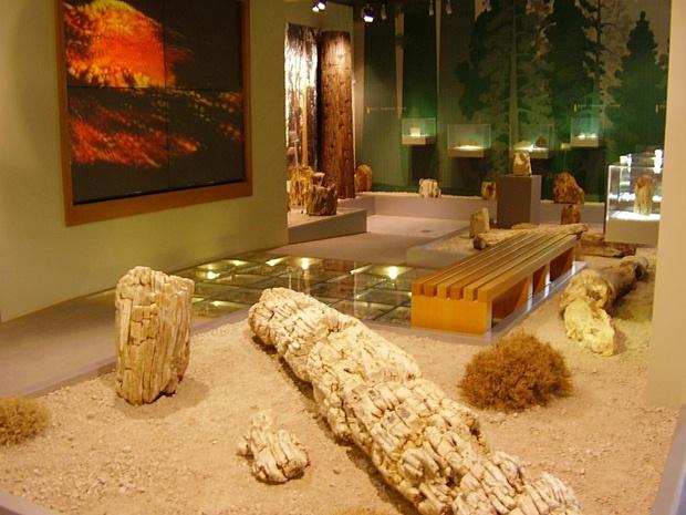 fosillesmis-orman-muzesi-ic